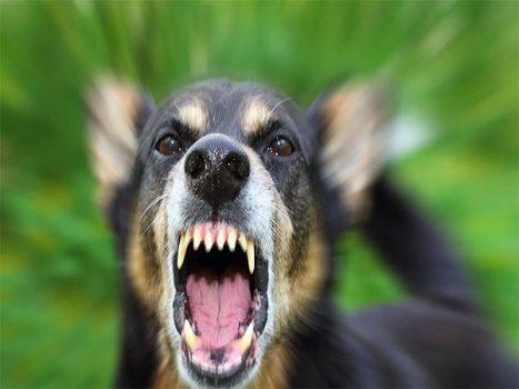 Mơ chó cắn đánh con gì? giải mã giấc mơ thấy chó