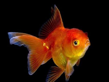 Mơ thấy cá có ý nghĩa gì? đánh con gì chính xác nhất?