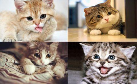 Mơ thấy mèo mang điềm báo gì? đánh con gì?
