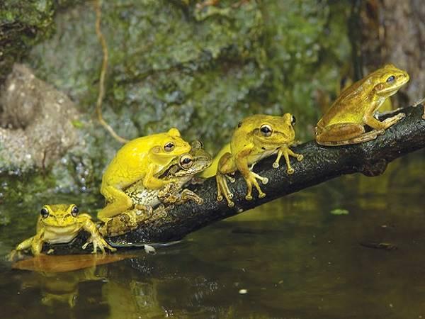 Mơ thấy ếch đánh con gì? Giải mã bí ẩn chiêm bao thấy ếch?